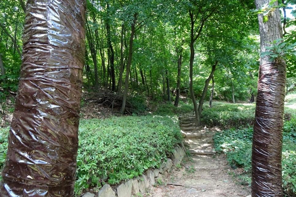 자연 속 힐링쉼터! 시흥 소래산 산림욕장