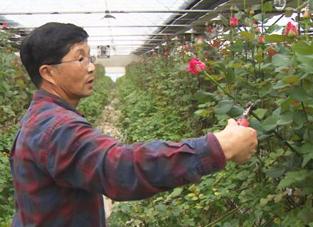 경기도, 도내 화훼 농가에 농자재 지원  이미지