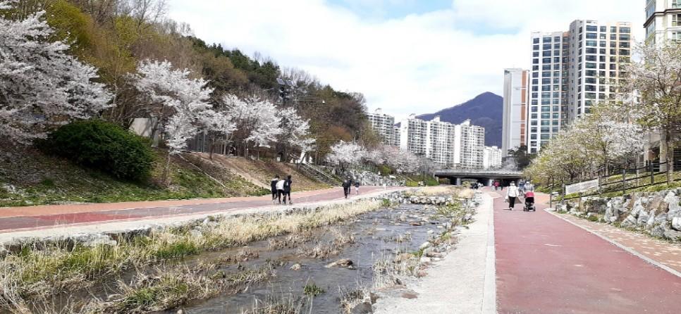 봄을 맞이한 호만천의 아름다운 봄 풍경