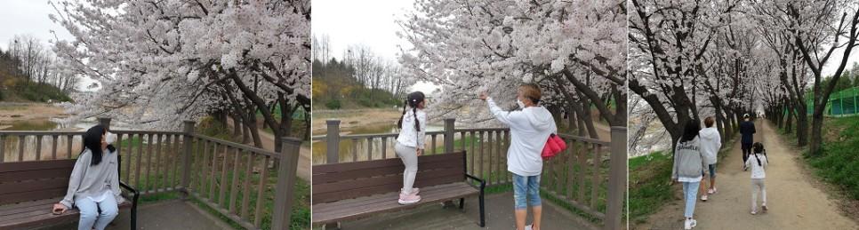 꿈기자가 가족과 함께 벚꽃 풍경을 즐길고 있다.