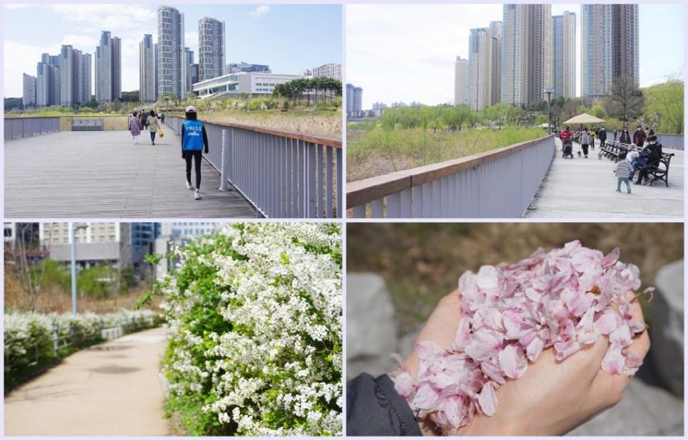 봄날을 즐기러 광교호수공원에 나들이 나온 가족들의 모습