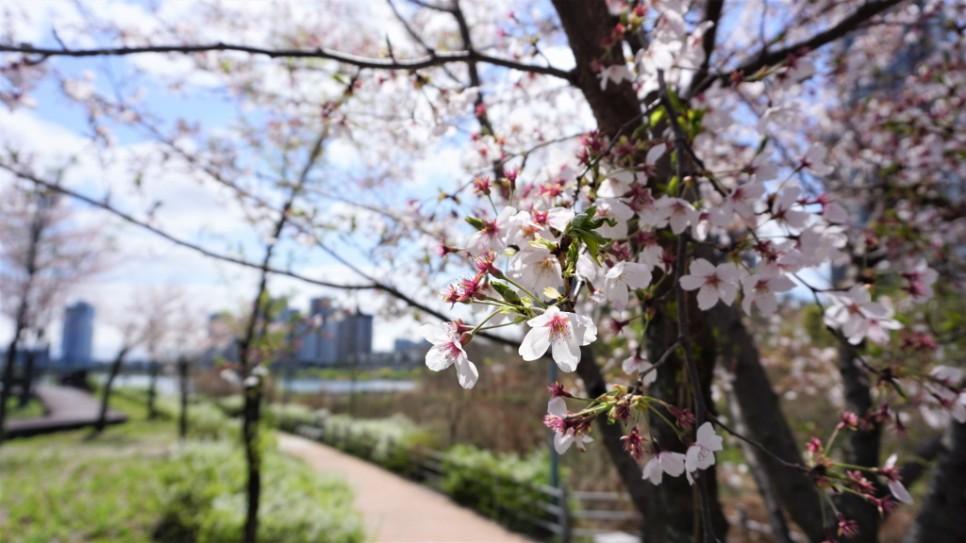 봄날 추억 만들기 좋은 아름다운 광교호수공원!