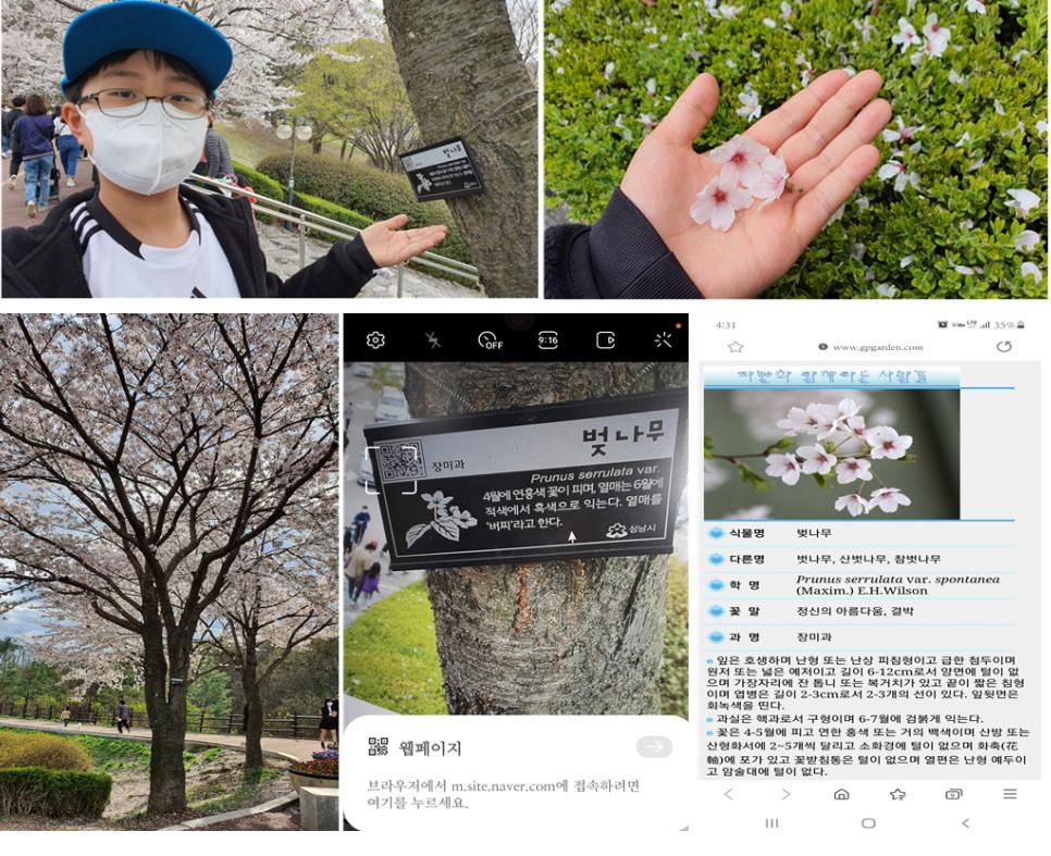 벚꽃나무와 같이 율동공원은 나무마다 표지판이 부착돼 있고, QR코드를 인식하면 자세한 설명도 볼 수 있다.