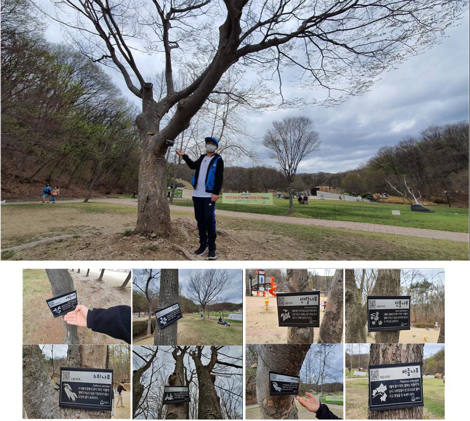 율동공원에는 때죽나무, 목백합, 느티나무, 칠엽수, 산딸나무, 단풍나무, 느티나무, 버즘나무 등 다양한 나무들이 자라고 있다.