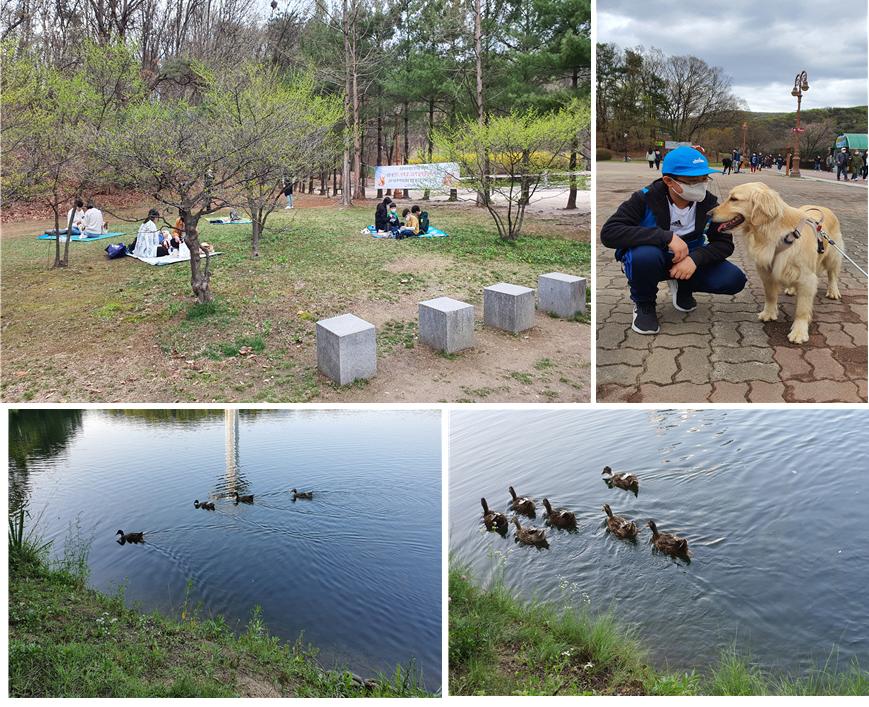 5인 이상 집합 금지 규칙을 지키며 잔디밭에서 휴식을 취하고 있는 시민들(왼쪽)과 산책 중인 멋진 반려견의 모습 그리고 호수에서 헤엄치는 오리 가족