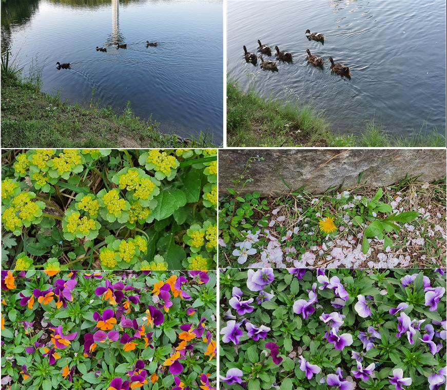 봄을 알리는 율동공원의 다양한 꽃들