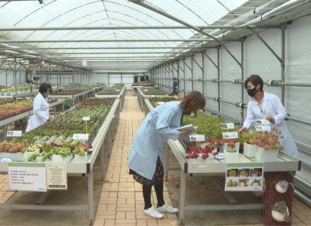 경기도 개발 다육식물 신품종 '인기몰이' 이미지